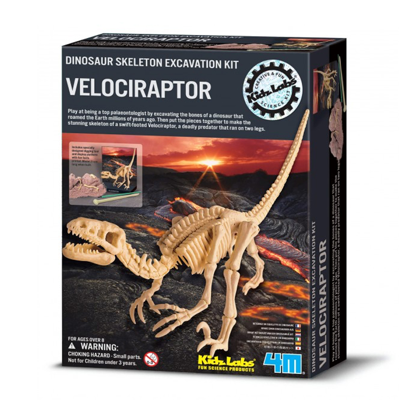 Image of   4M Kidzlabs eksperiment legetøj, Velociraptor skelet