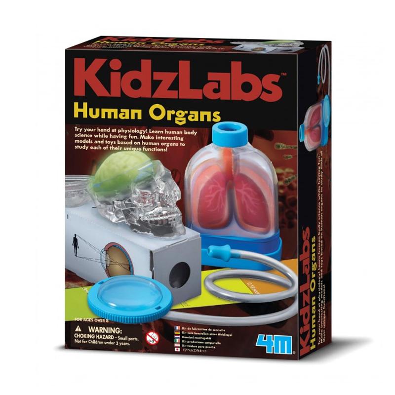 Image of   4M KidzLabs eksperiment legetøj, de menneskelige organer