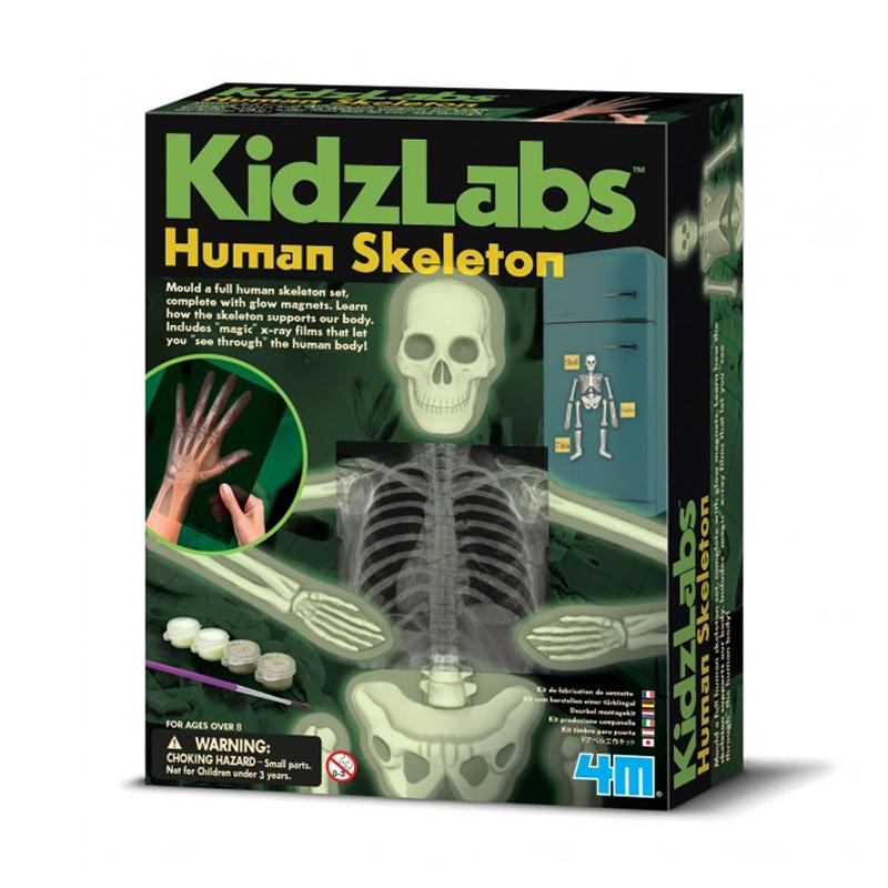 Image of   4M KidzLabs eksperiment legetøj, selvlysende menneskeskelet