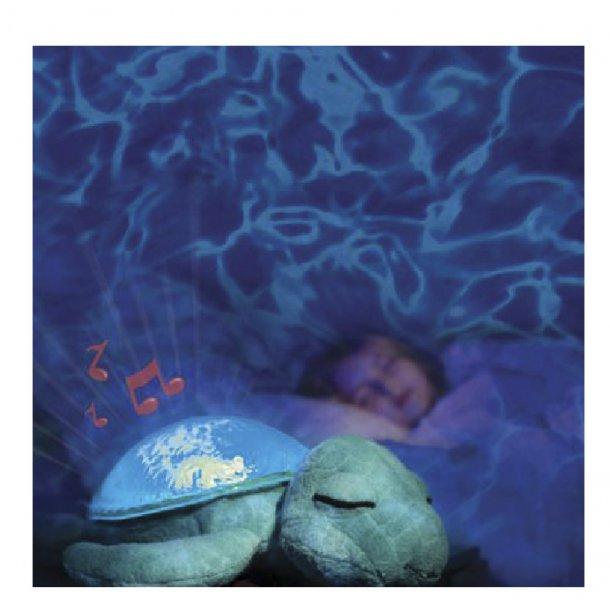 Tranquil skildpadde, aqua